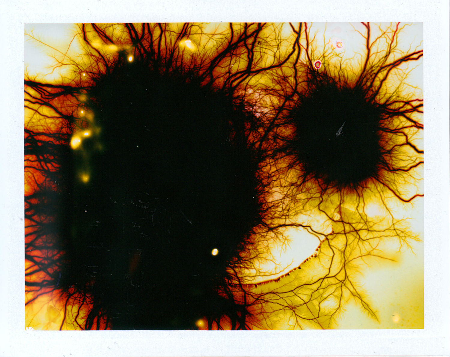 phillip stearns polaroid electric shock color abstract