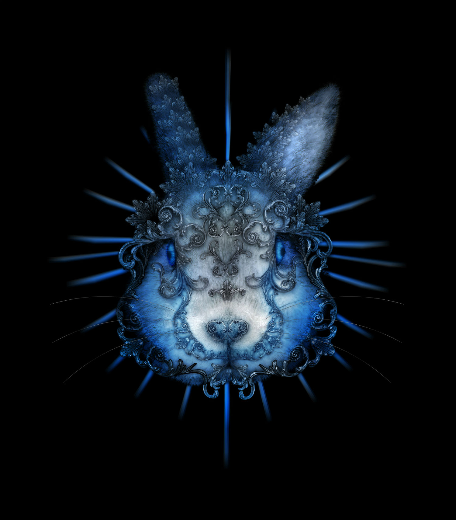 penny collins studio 566 rabbit