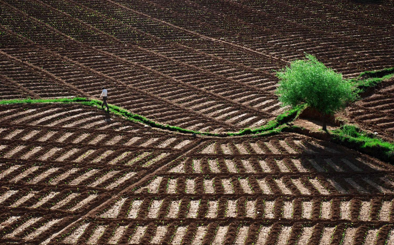Krzysztof Browko photography landscape brown green field farming