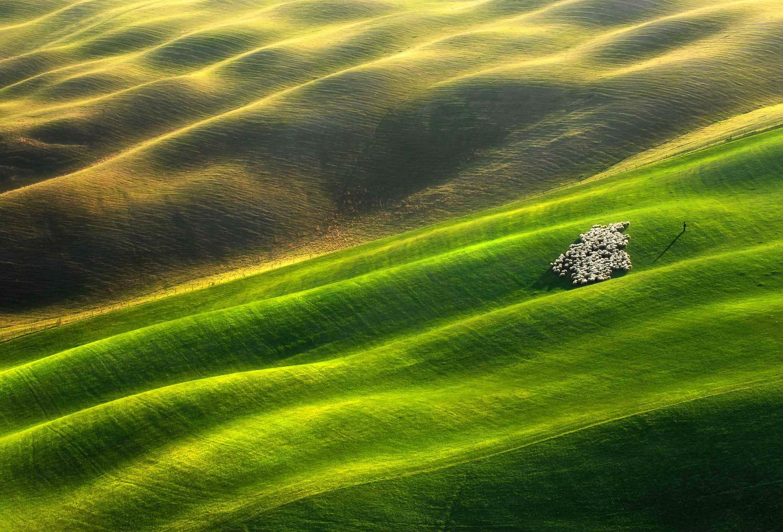 landscape photography green field light sheep