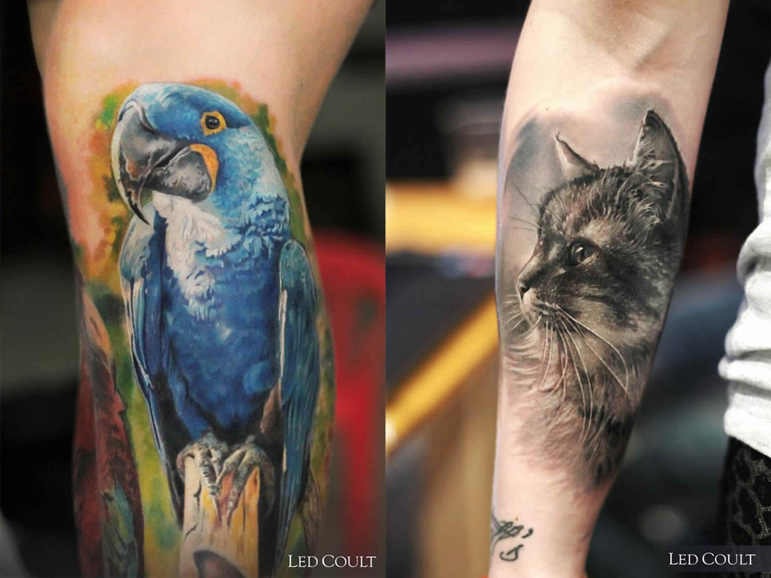 blue parrot and cat tattoos by led coult