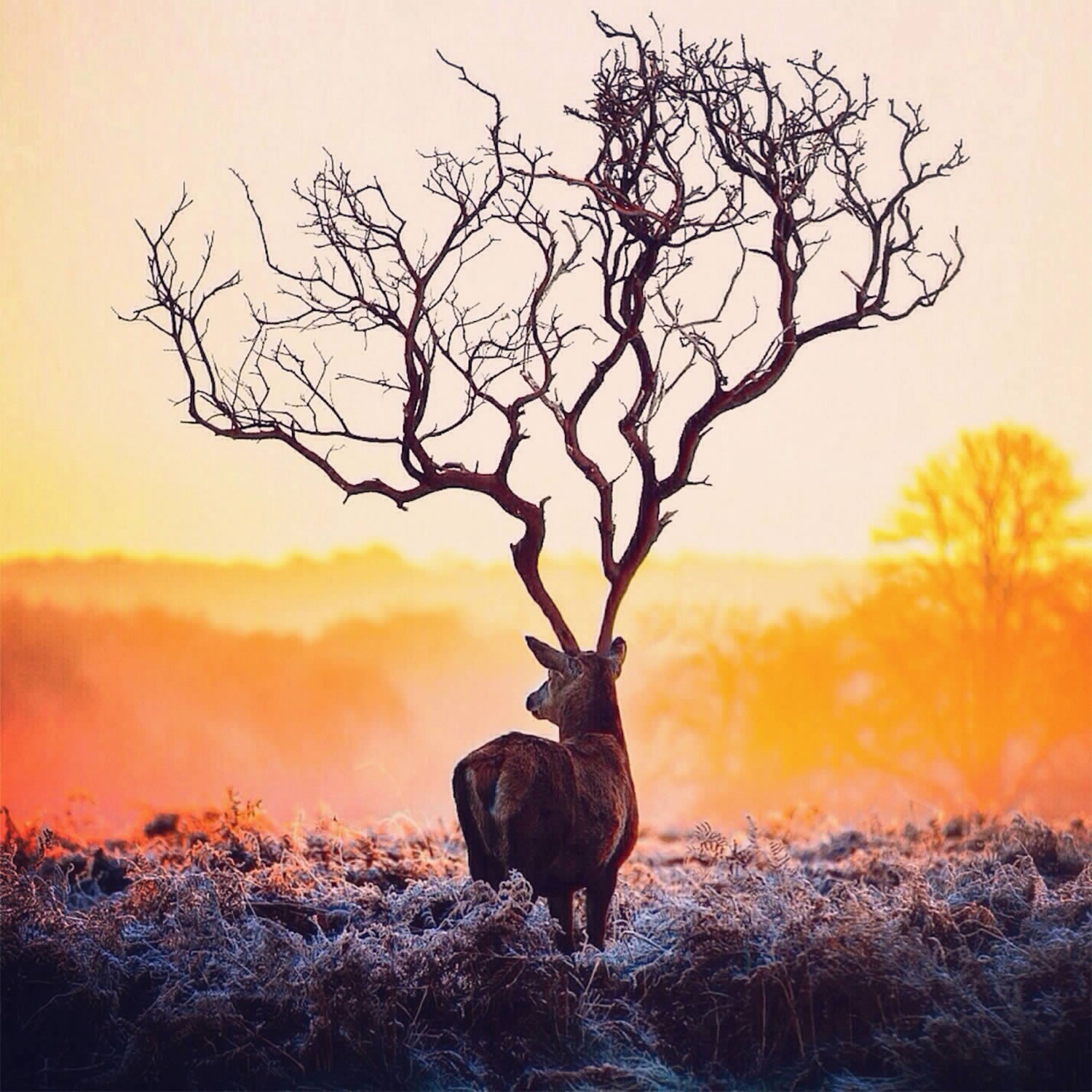 robert jahns surreal digital photo edit deer with tree antlers