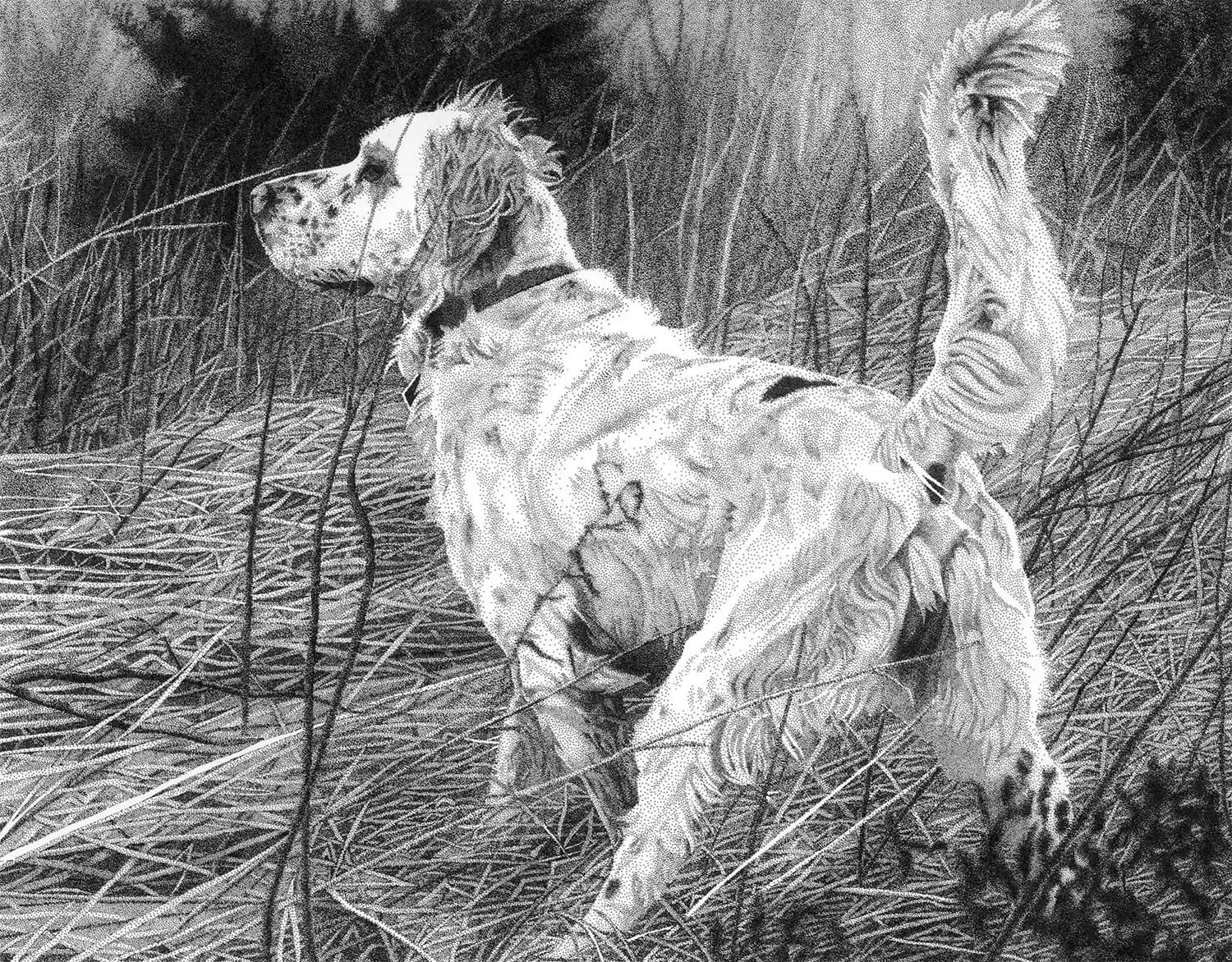 setter, stippling portrait of dog by Rob Christensen