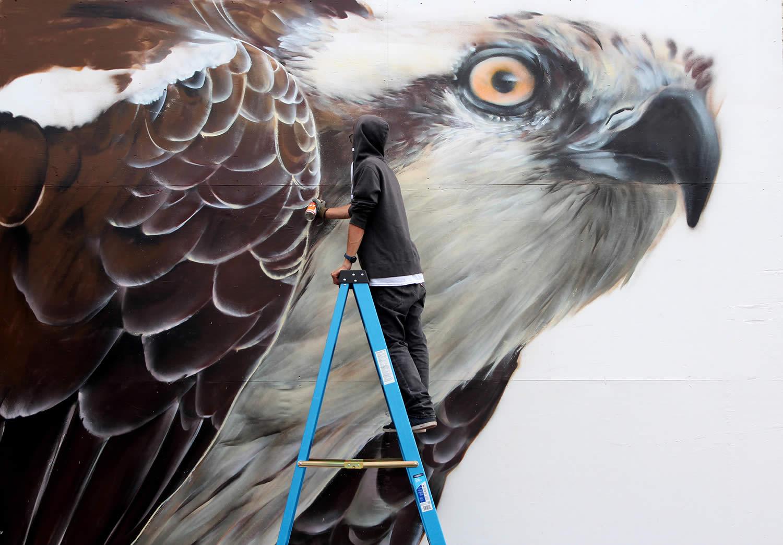 eagle, graffiti by mantra rea