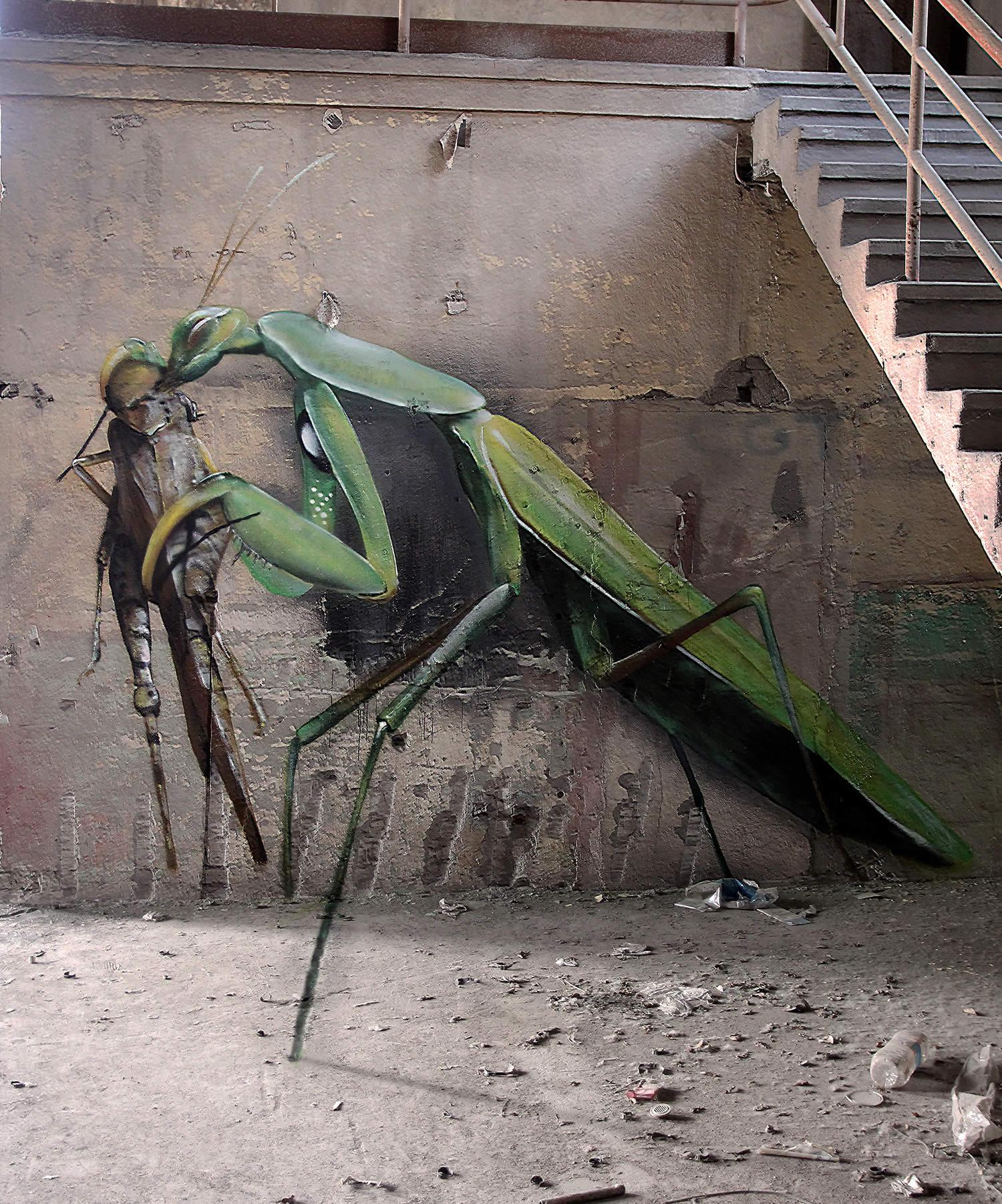 grasshopper, graffiti by mantra rea