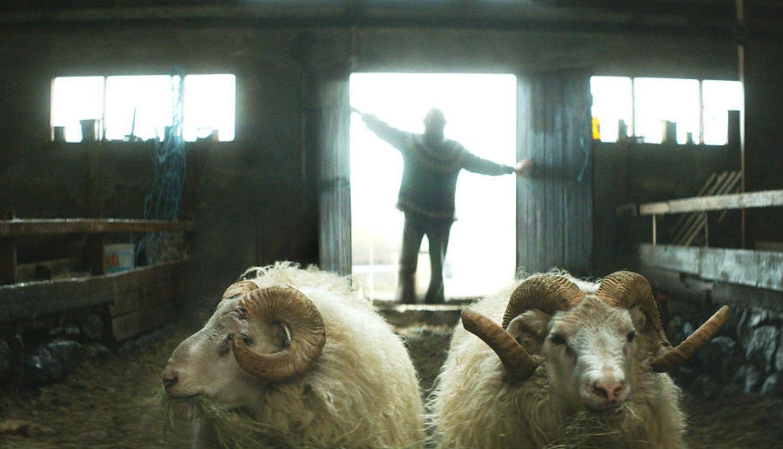 scandinavian film cinema 2015 rams iceland