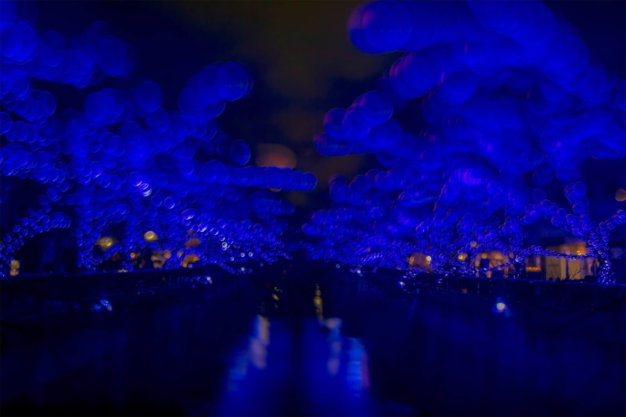 royal blue trees, bokeh photography, japan, by Takashi Kitajima
