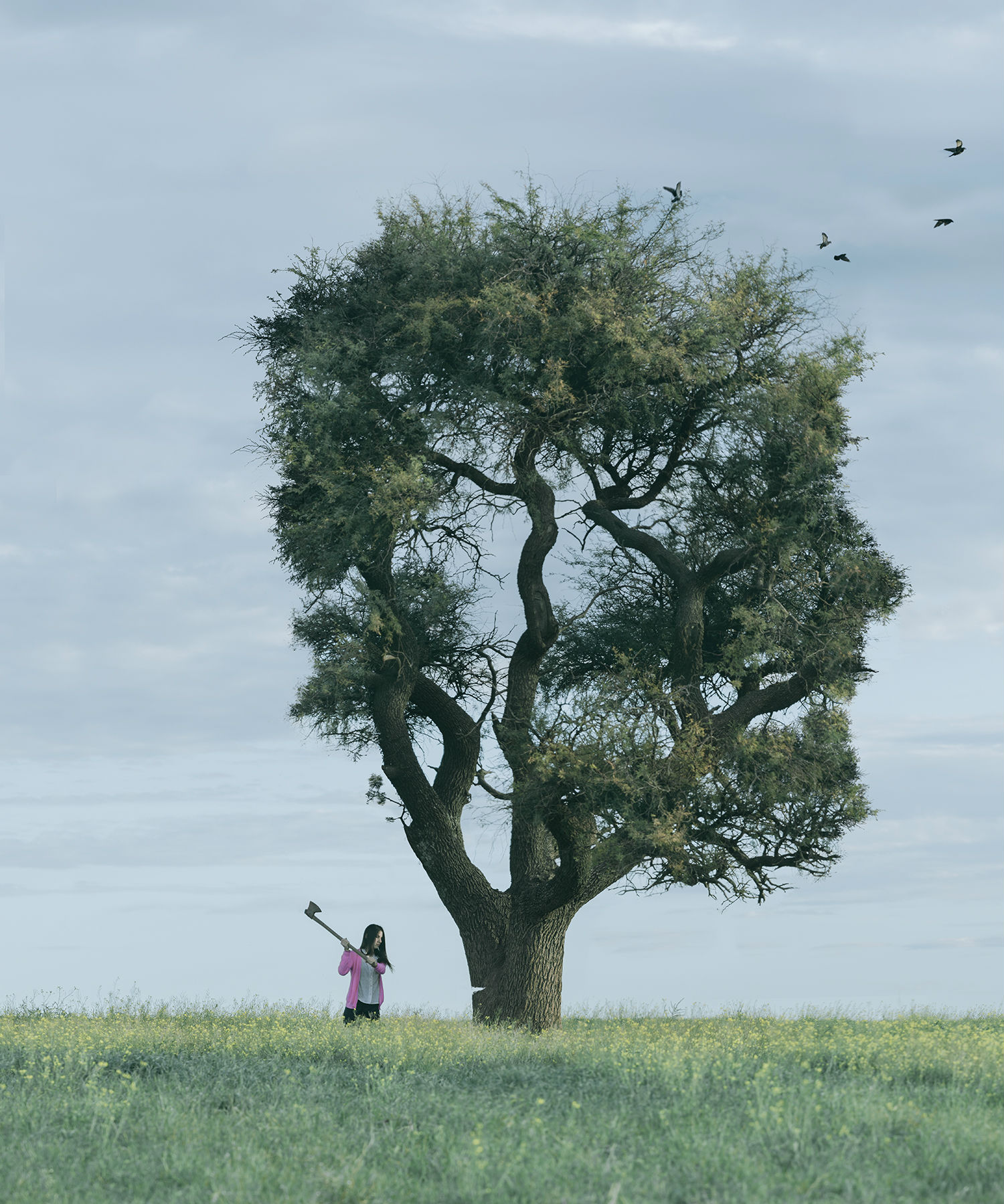 jairo alvarez photography surreal imagery colour odd illusion tree