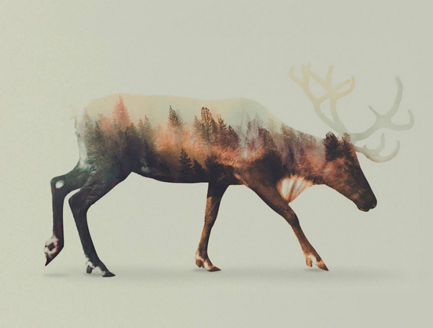 andreas lie double exposure animals