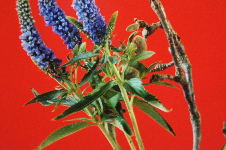 annette elm artist german photography flowers
