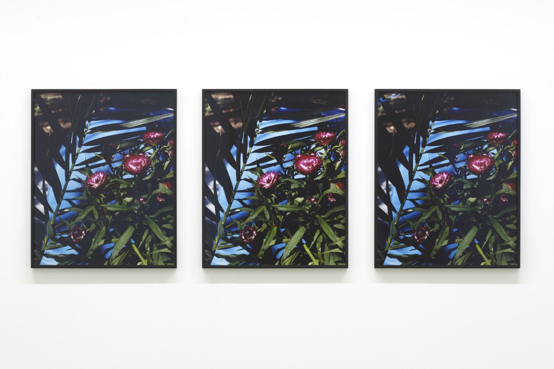 annette elm german artist flowers photography