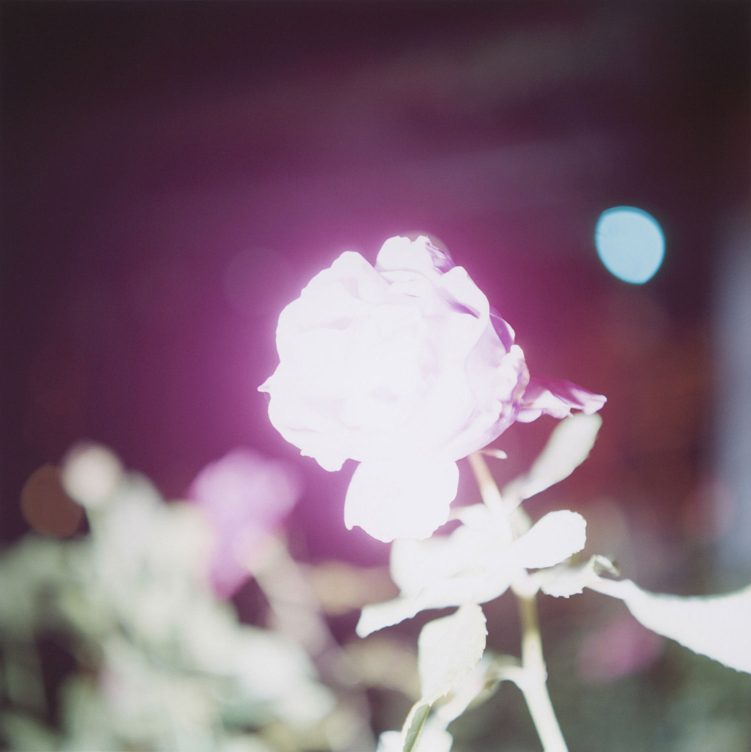 Rinko Kawauchi japan photography pink light