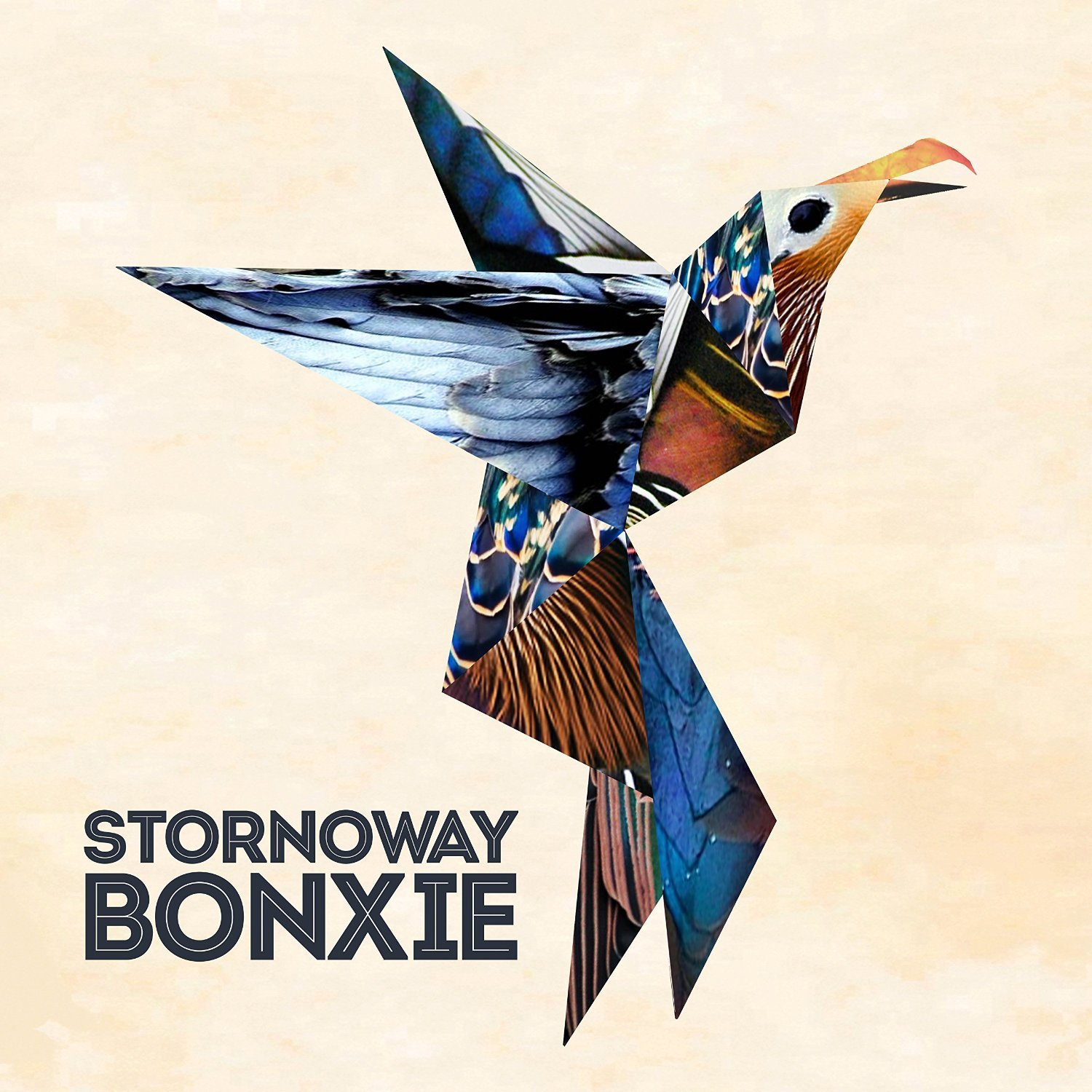 stornoway bonxie origami bird  illustration