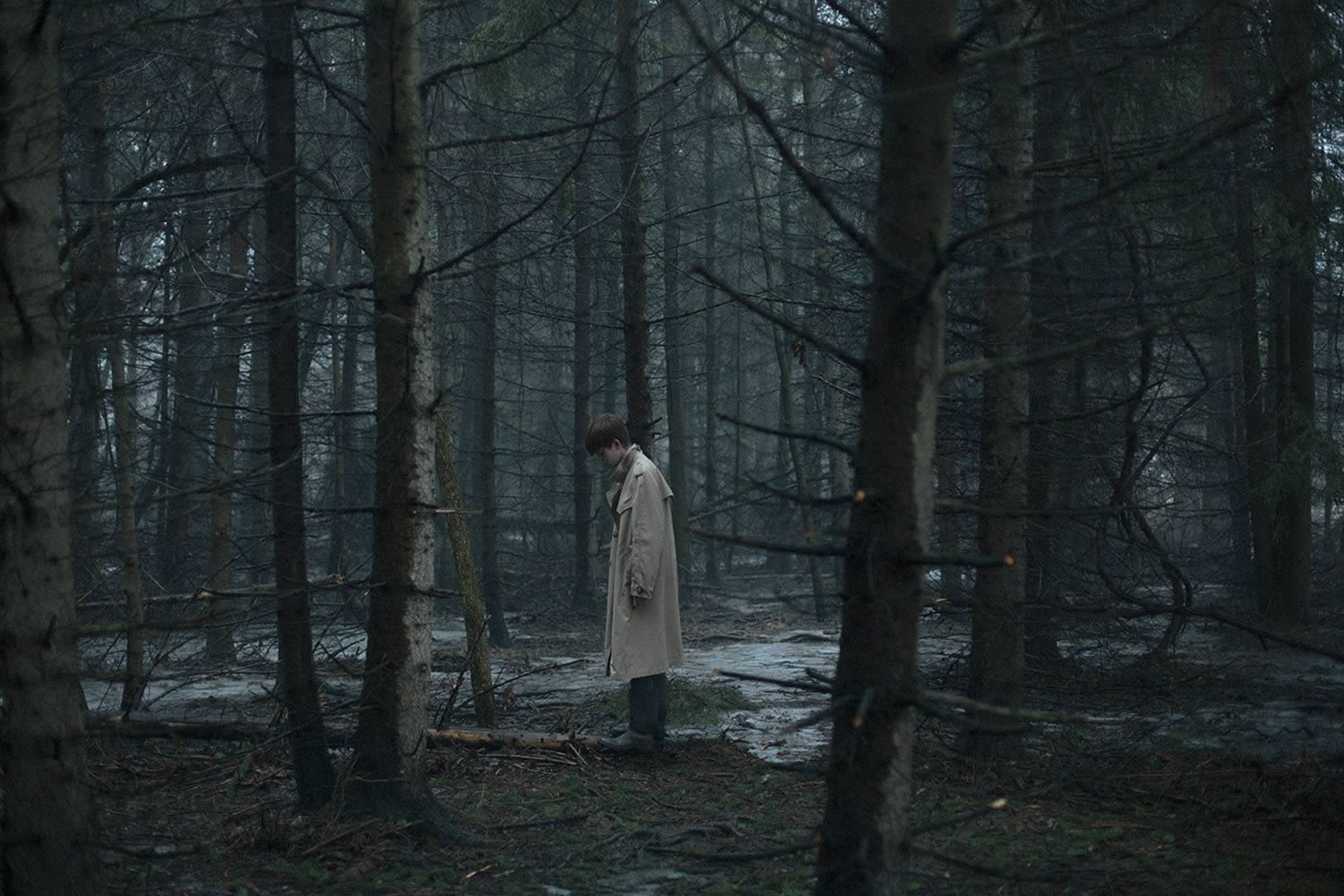 in forest, picture by alex currie