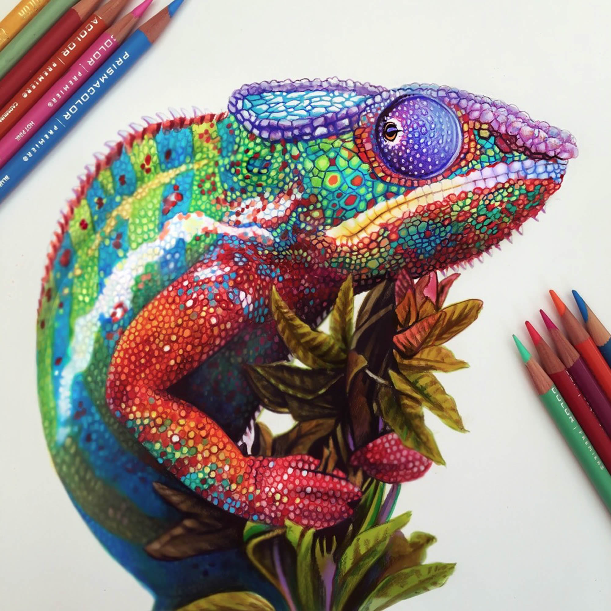 Chameleon drawing, colorful