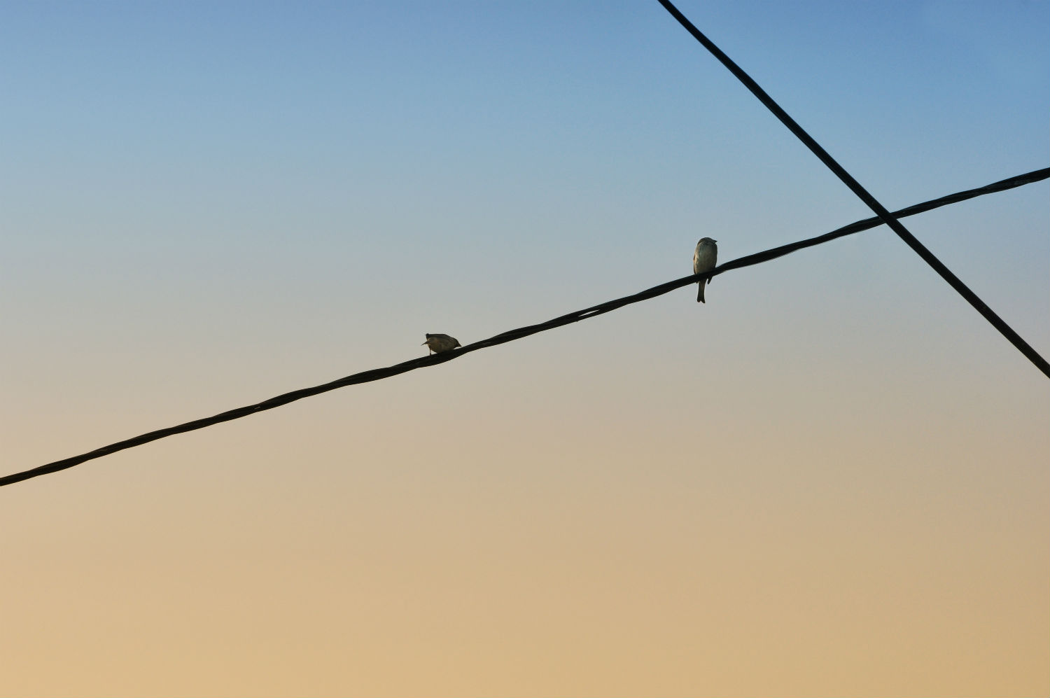 minimalist photography blue yellow sky birds wires