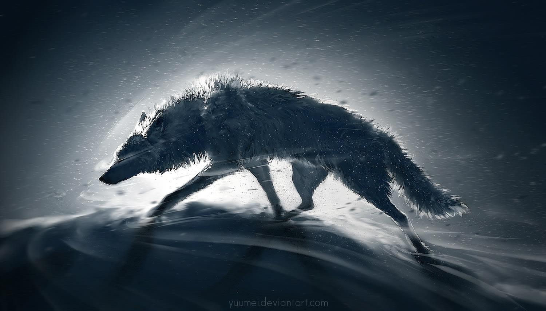 grey wolf, spotlight illustration