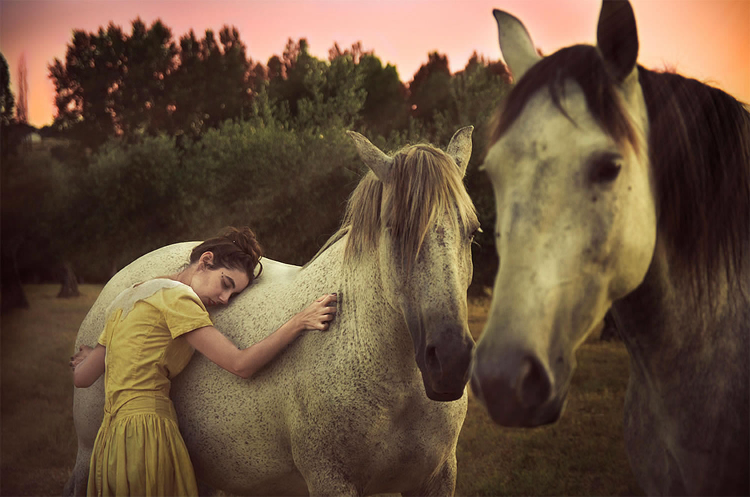 girl and horses, photography