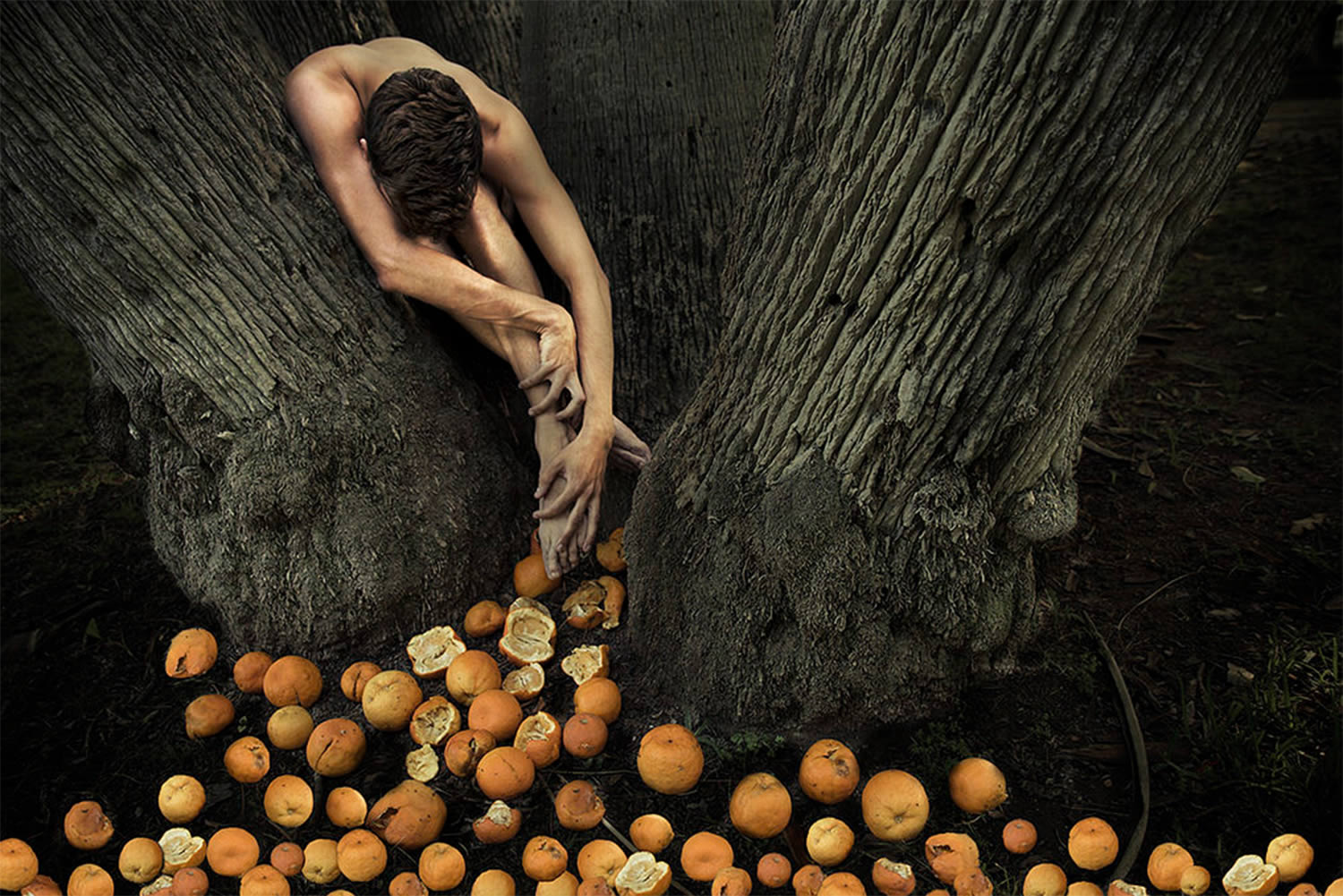 bitter fruit tree and man