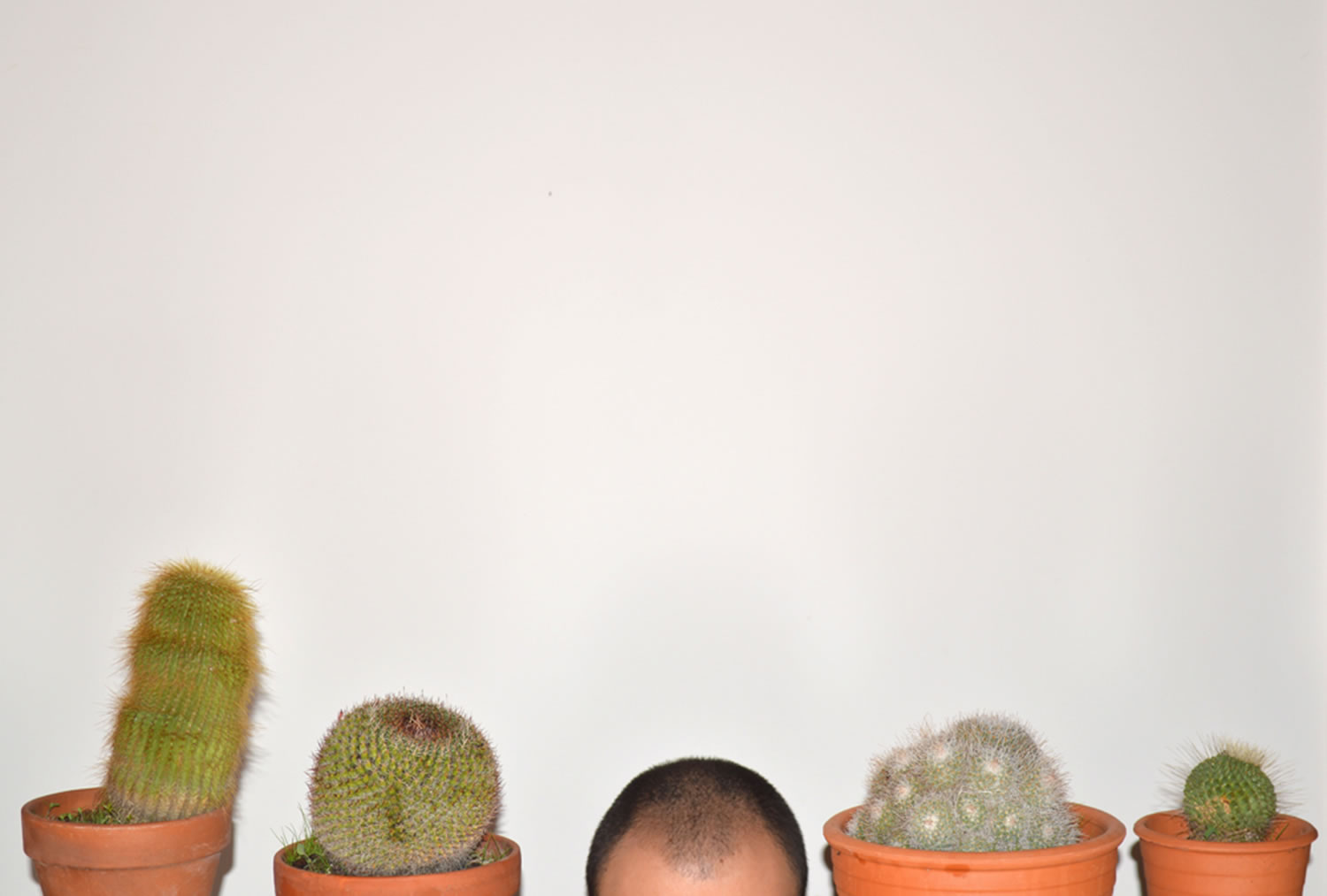 blad head and cactuses