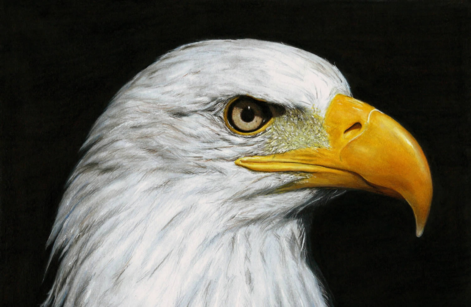 bald eagle, hyperrealistic drawing