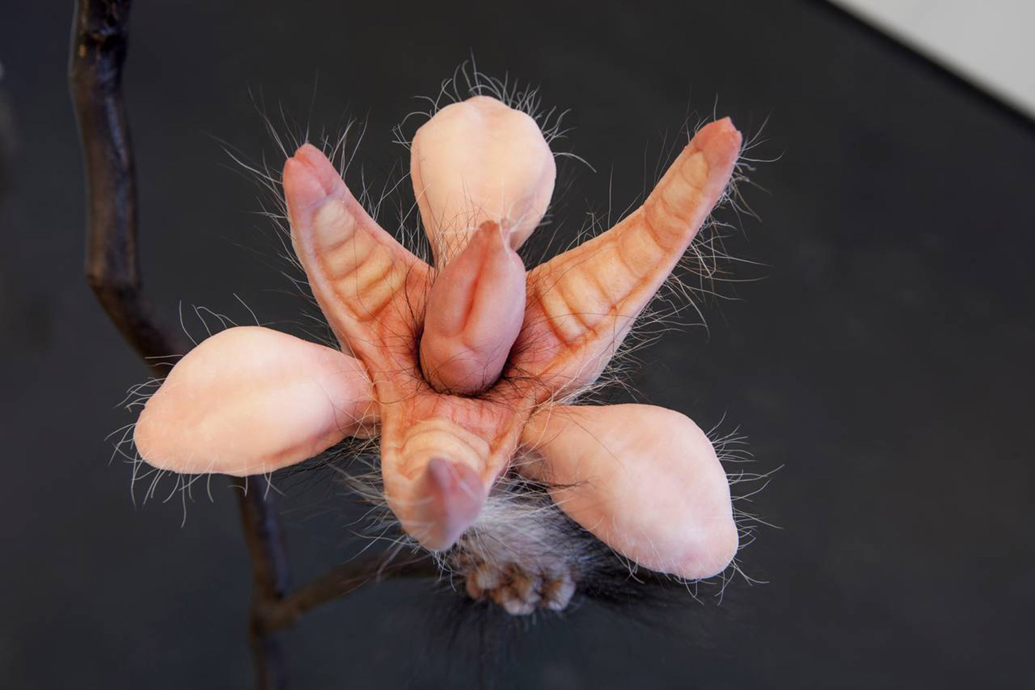 Patricia Piccinini, Metaflora (Twin Rivers Mouth, detail), fleshy flower sculpture