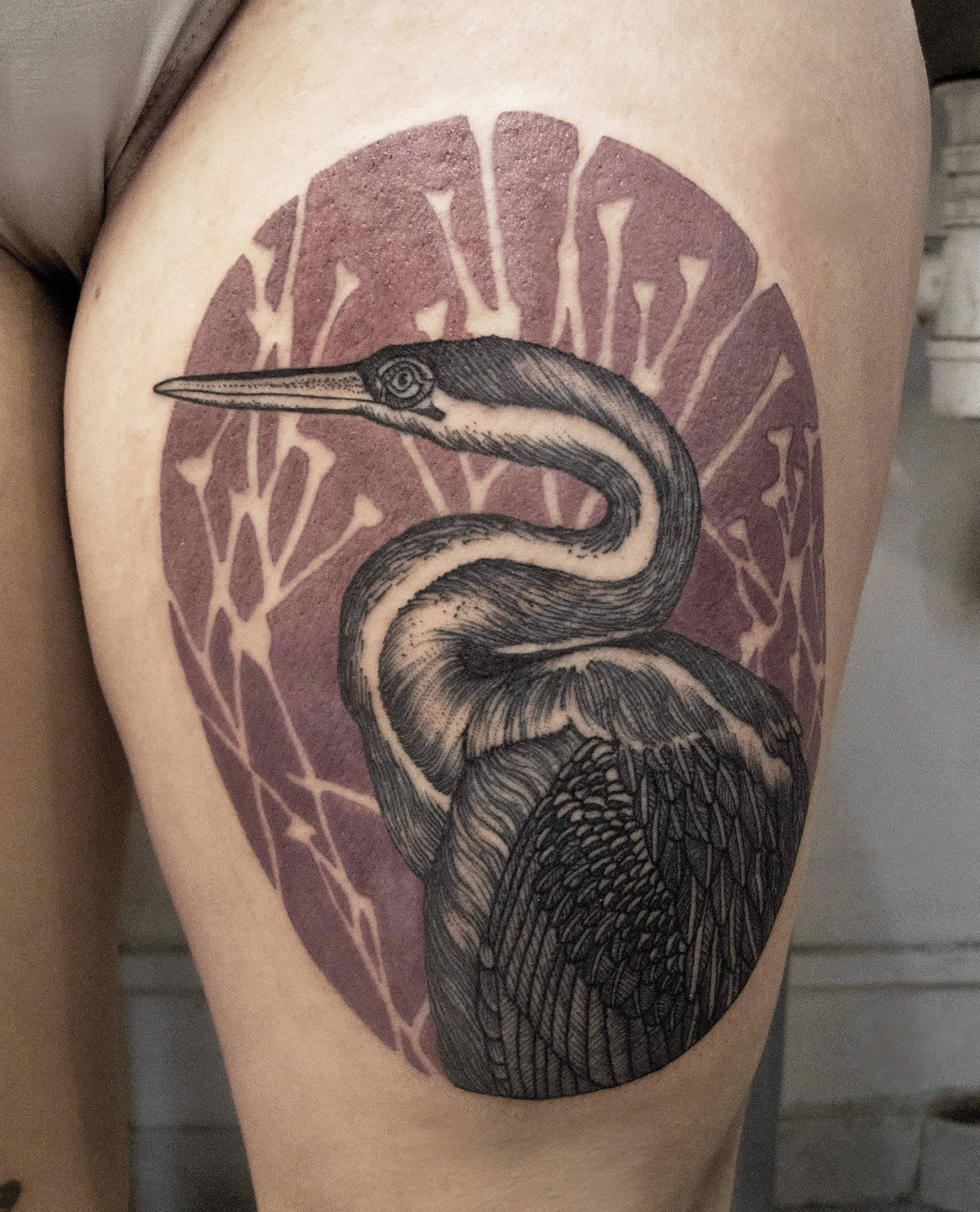 bird tattoo, illustration style
