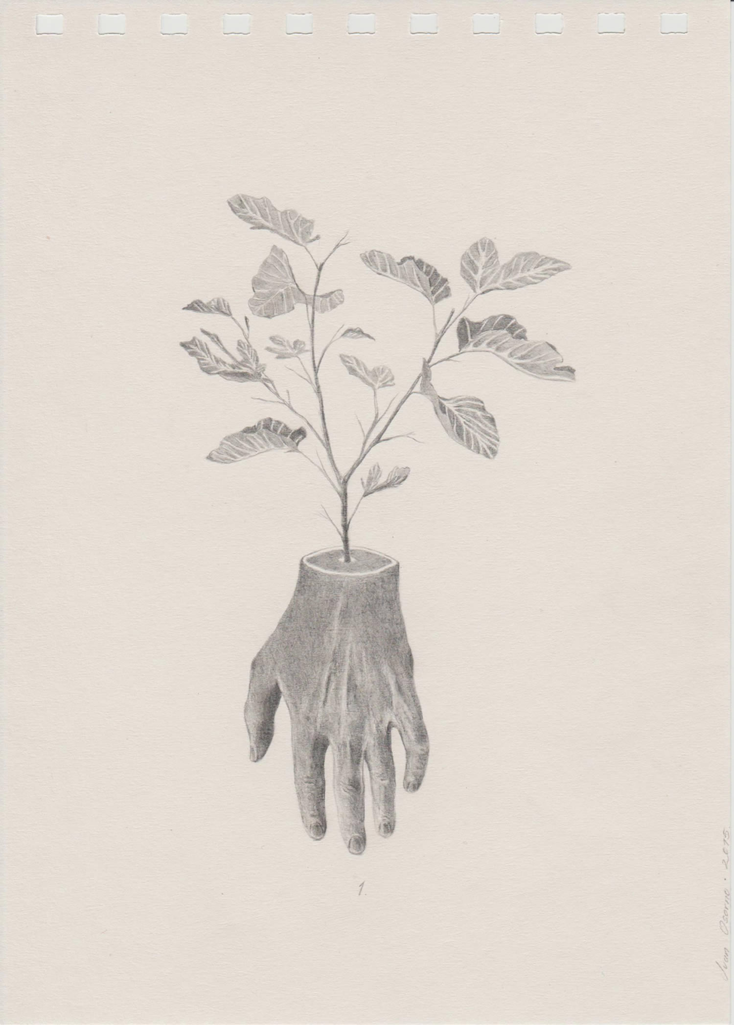 plant growing out of hand, drawing, pencil art