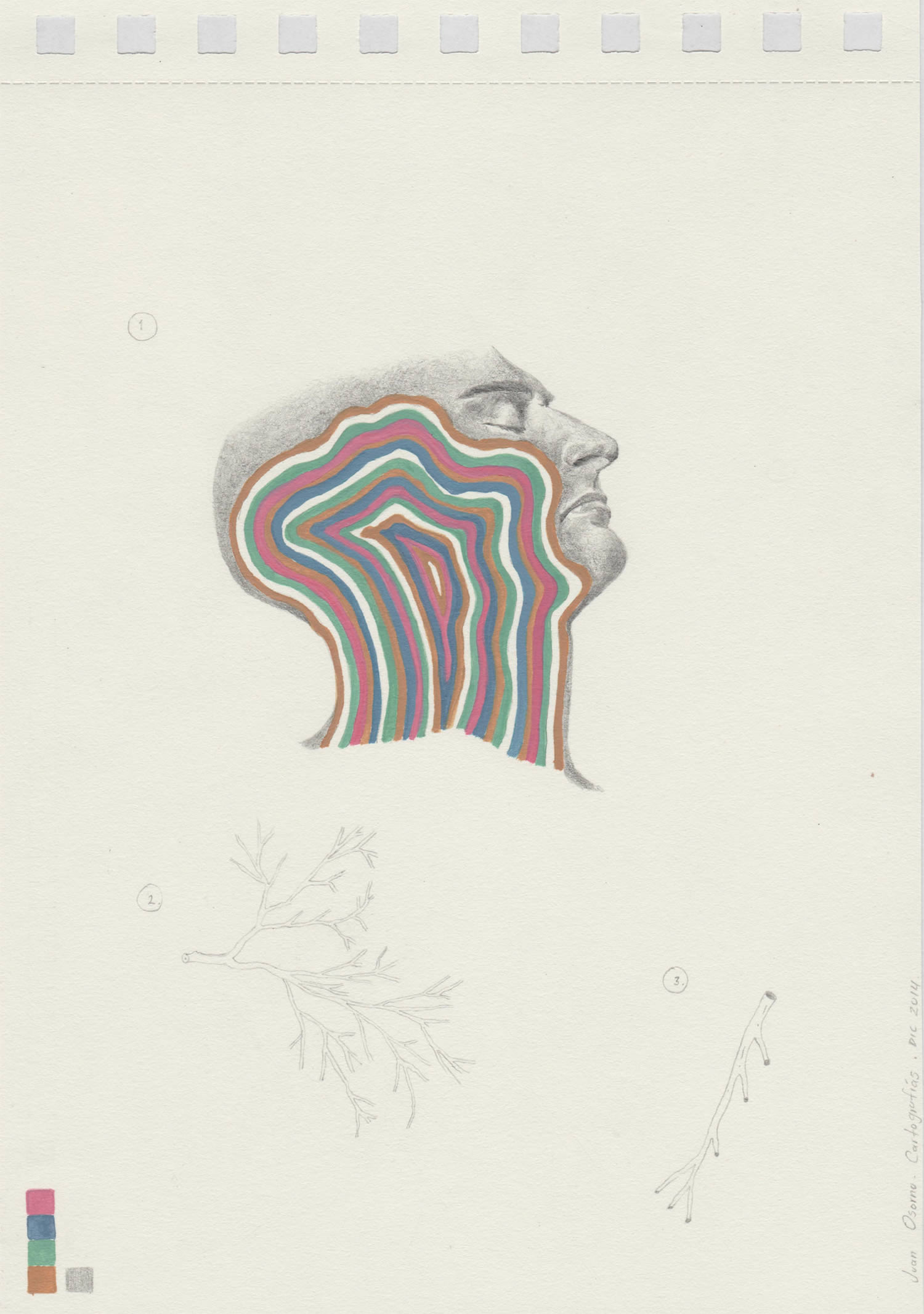 rainbow vein head, portrait