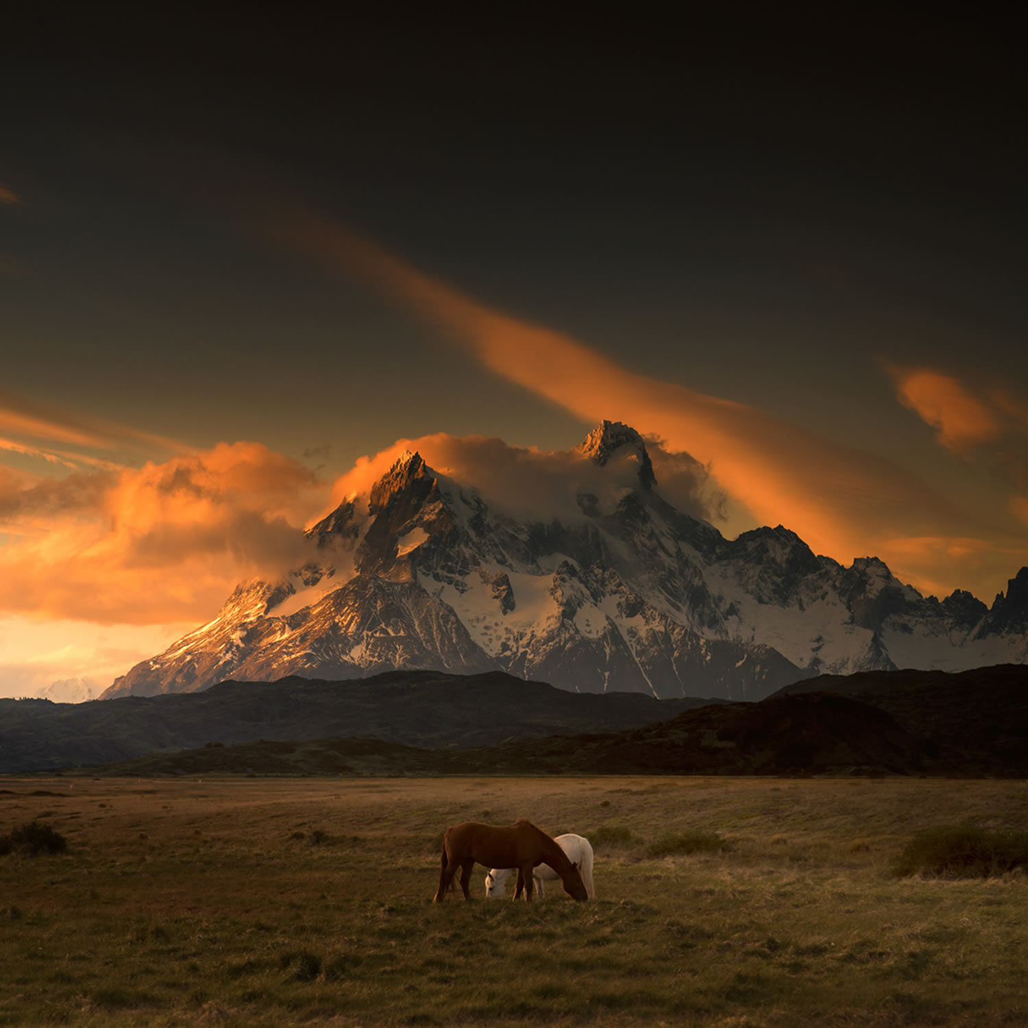 horses and mountain, patagonia