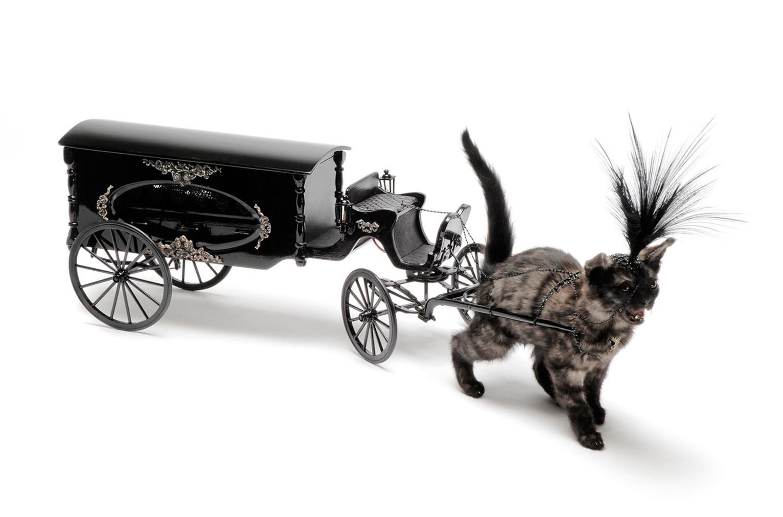 Julia DeVille, kitten pulling black carriage