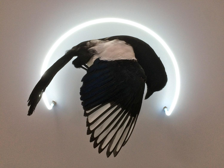 Iris Schieferstein - magpie and fluorescent light