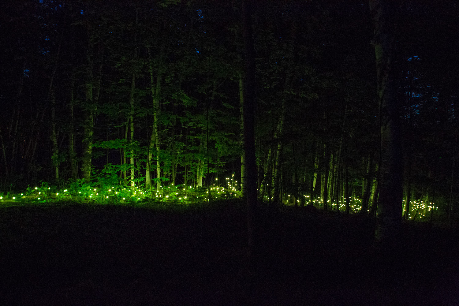 Moment Factory, Foresta Lumina - green lights