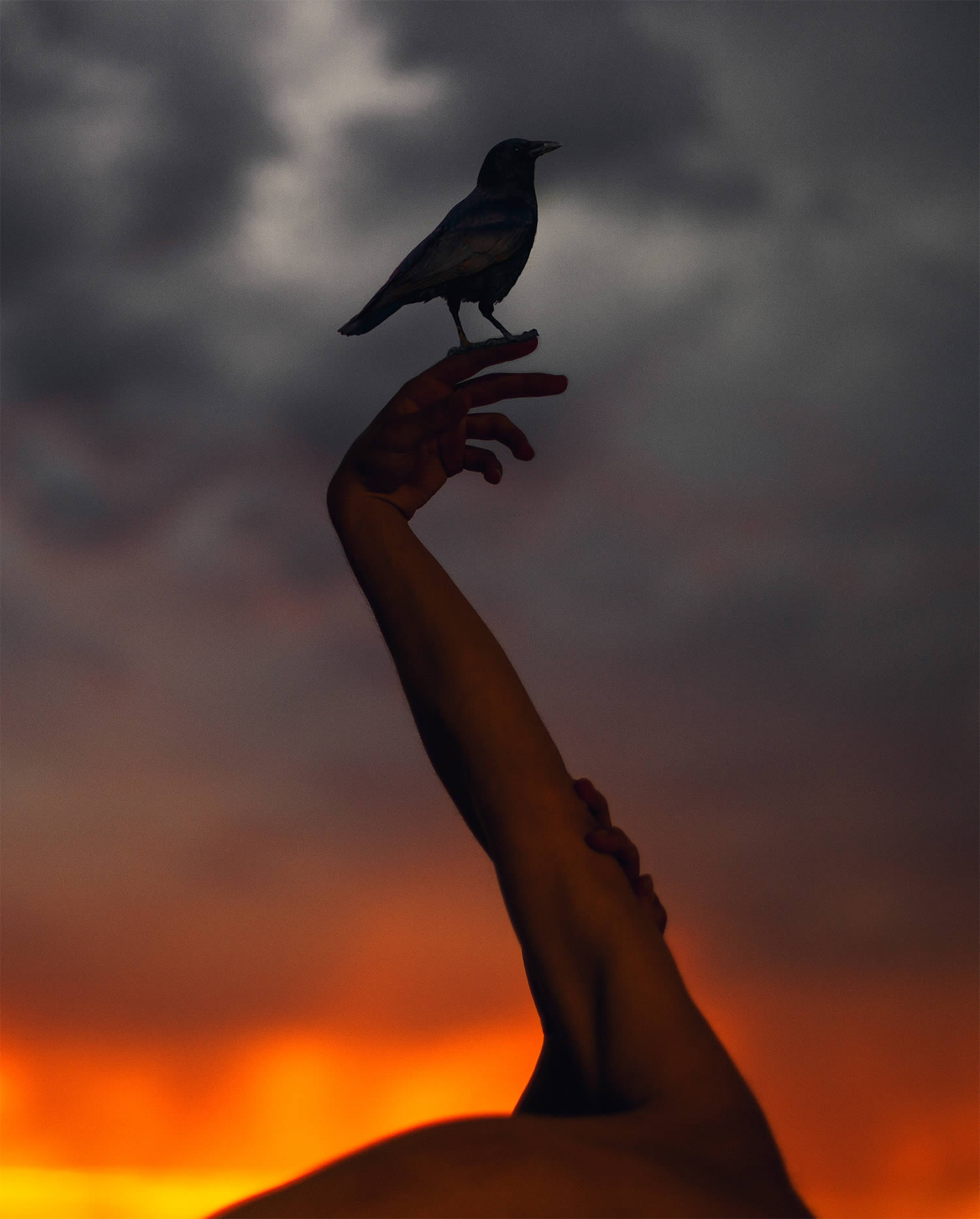 hand up in the air, holding a bird, sunset, photography