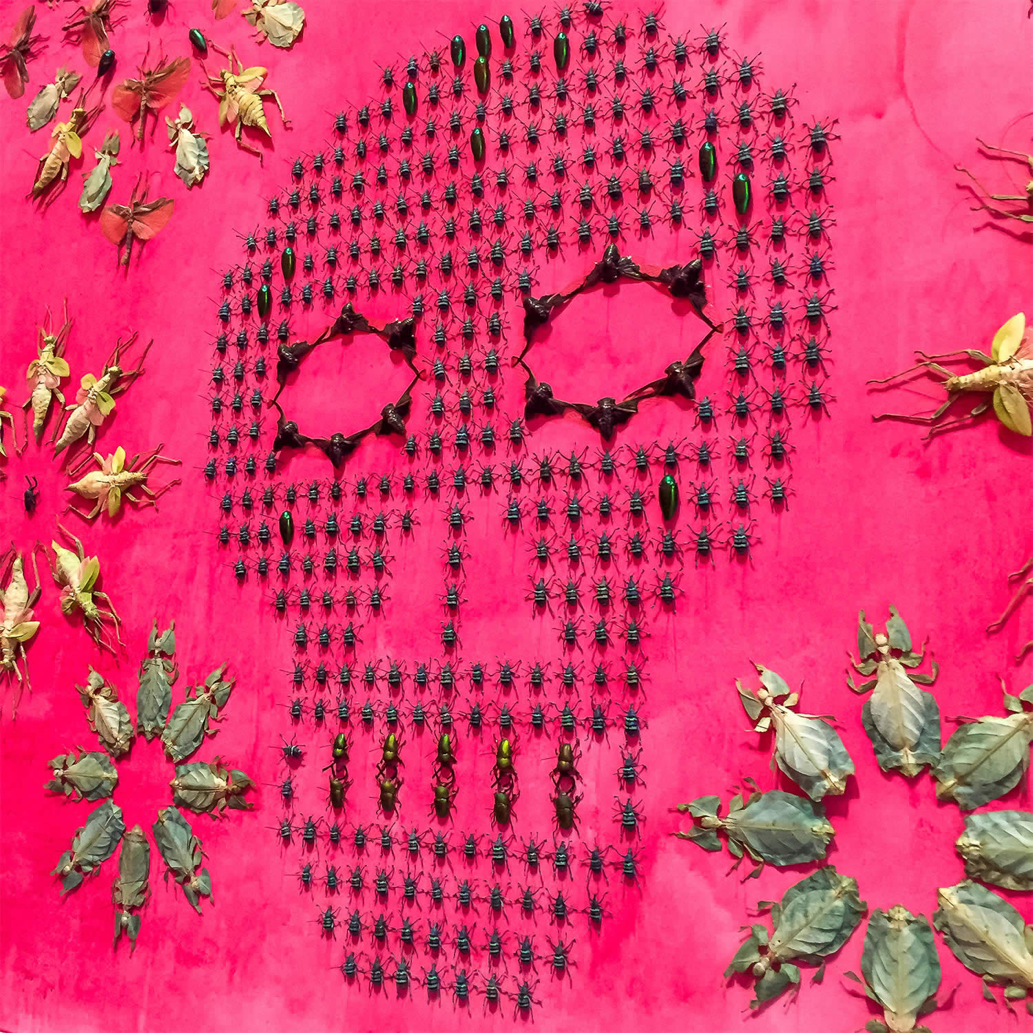 real bugs arranged in the shape of a skull by jennifer angus