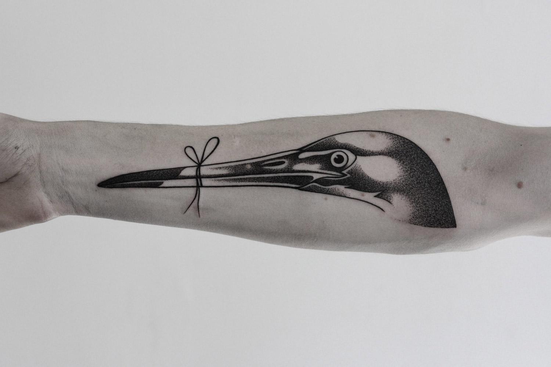 bird with its beak tied shut on arm