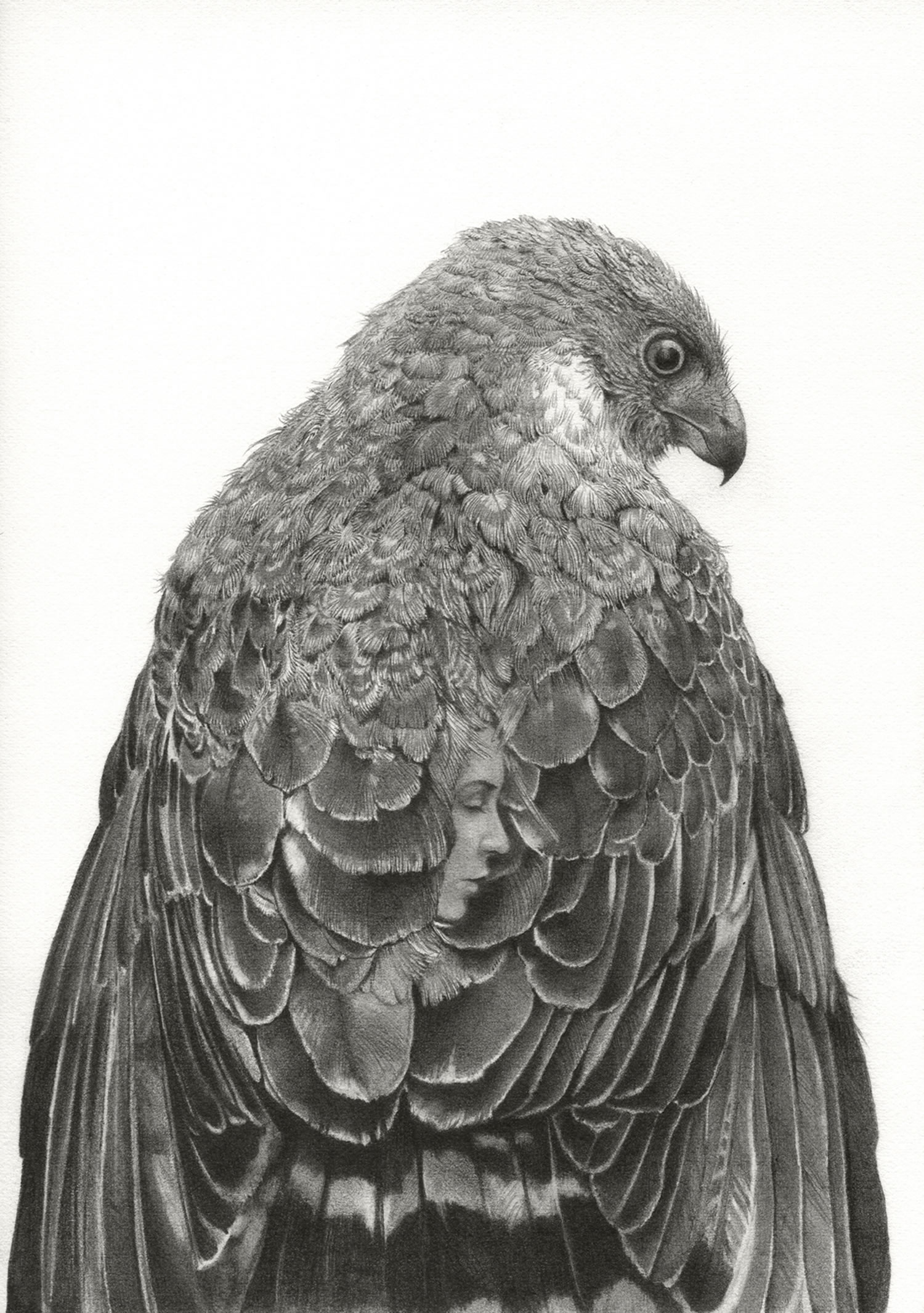 hawk drawing, woman hidden in feathers