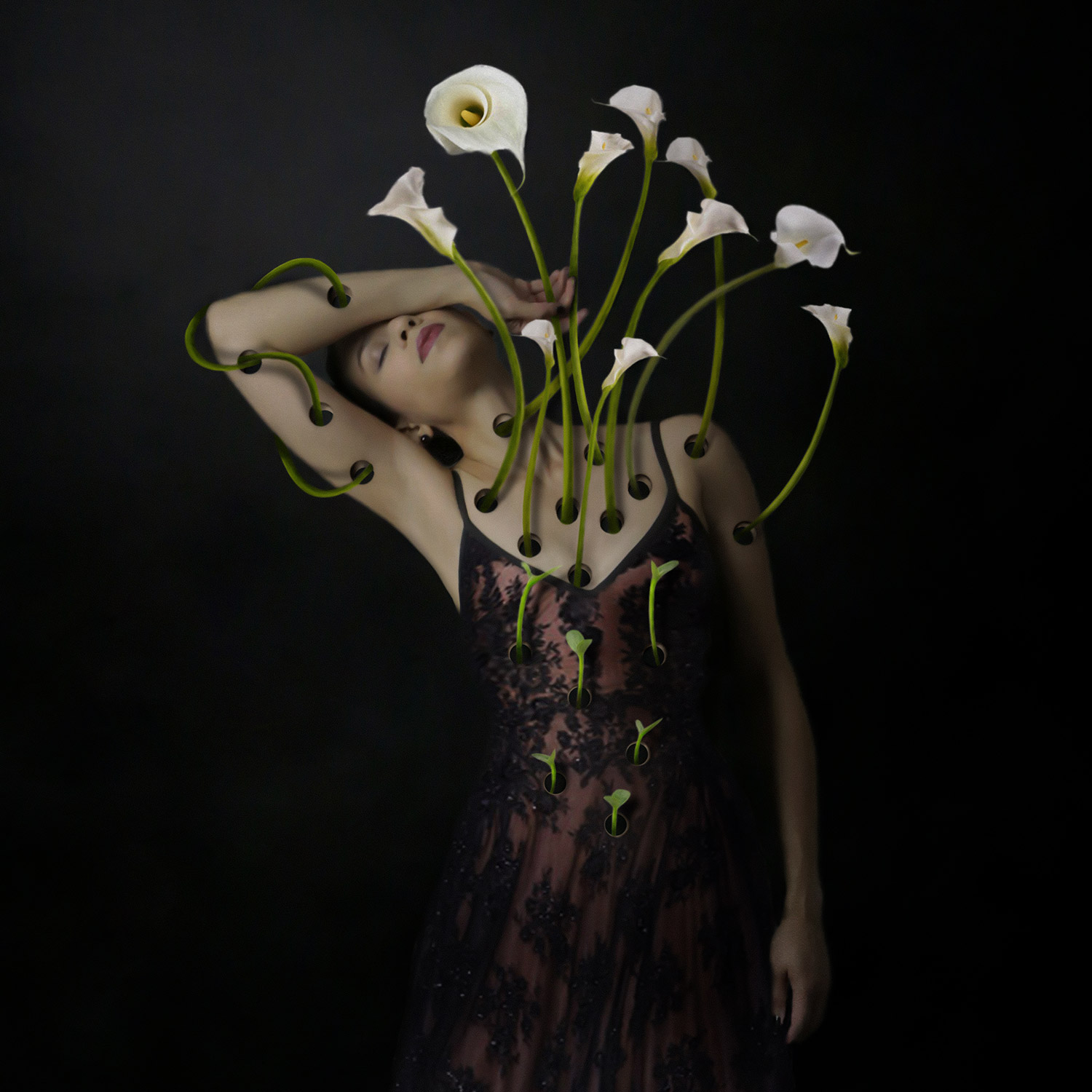 Josephine Cardin - regrowth