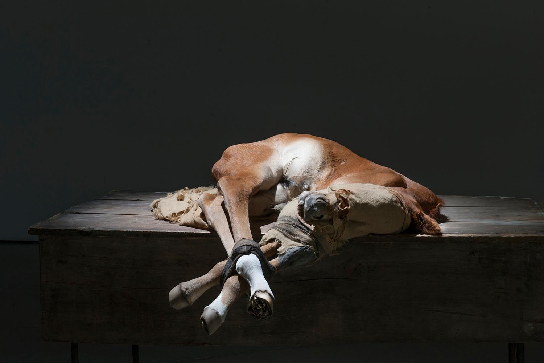 Berlinde de Bruyckere - dead cow