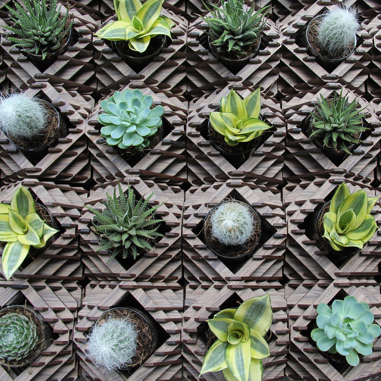 hexagon, plants