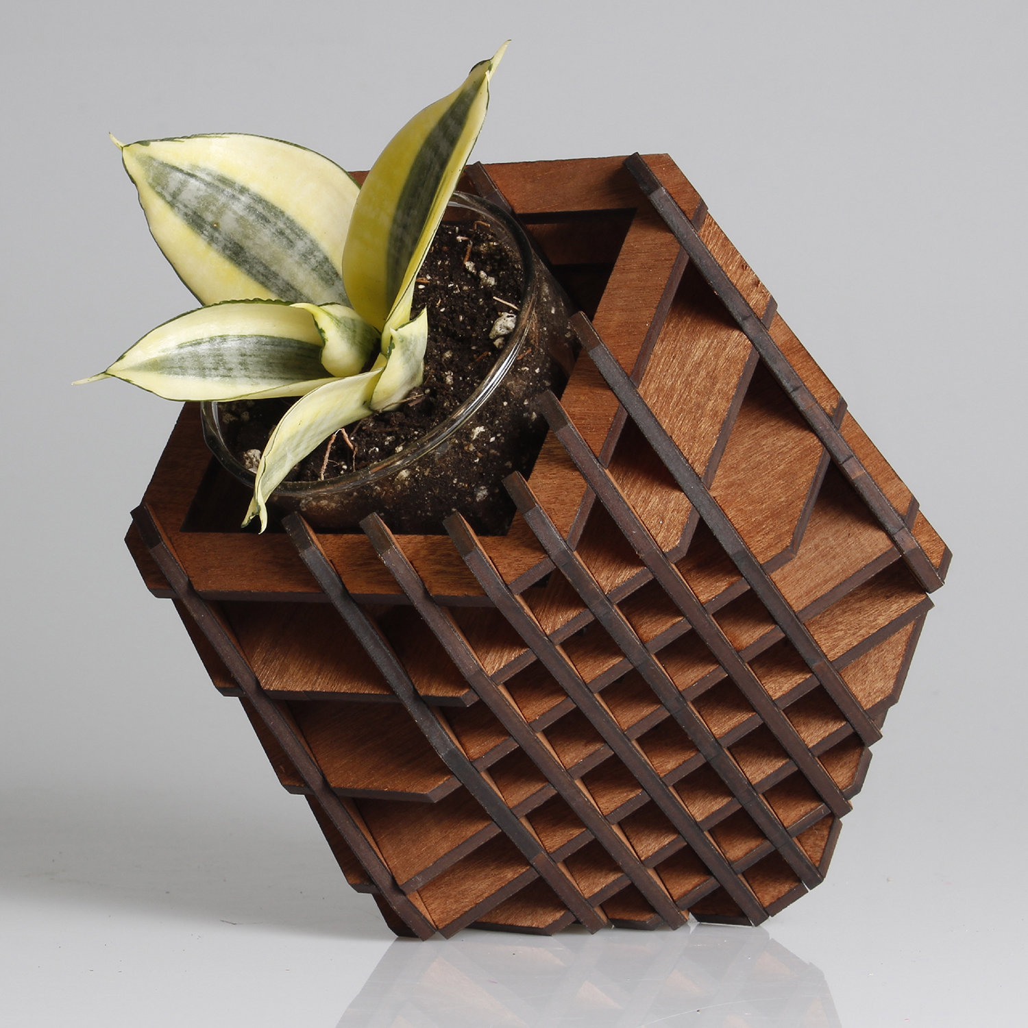 H-02 / 7 Positions Planter Planter by Hexagón Design