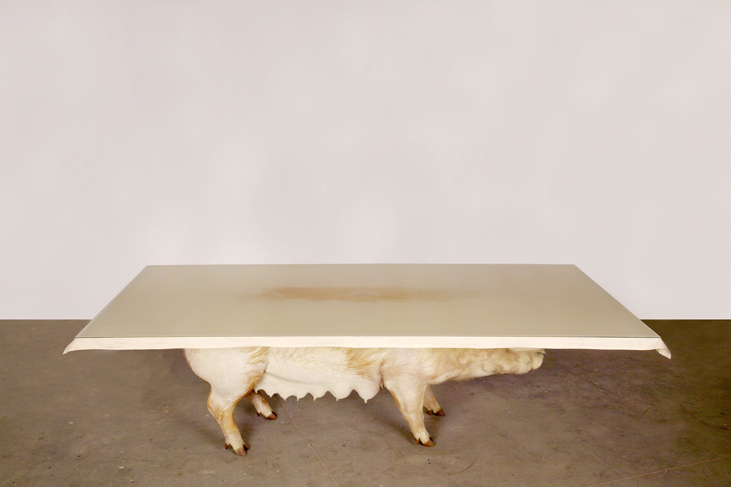Armin Blasbichler - ORSON I, pig taxidermy table, side view