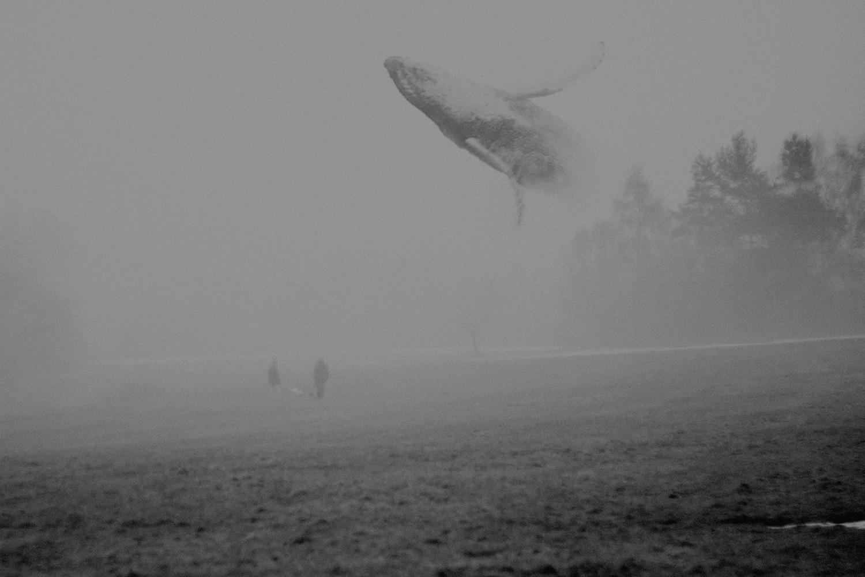Martin Vlach - whale in sky