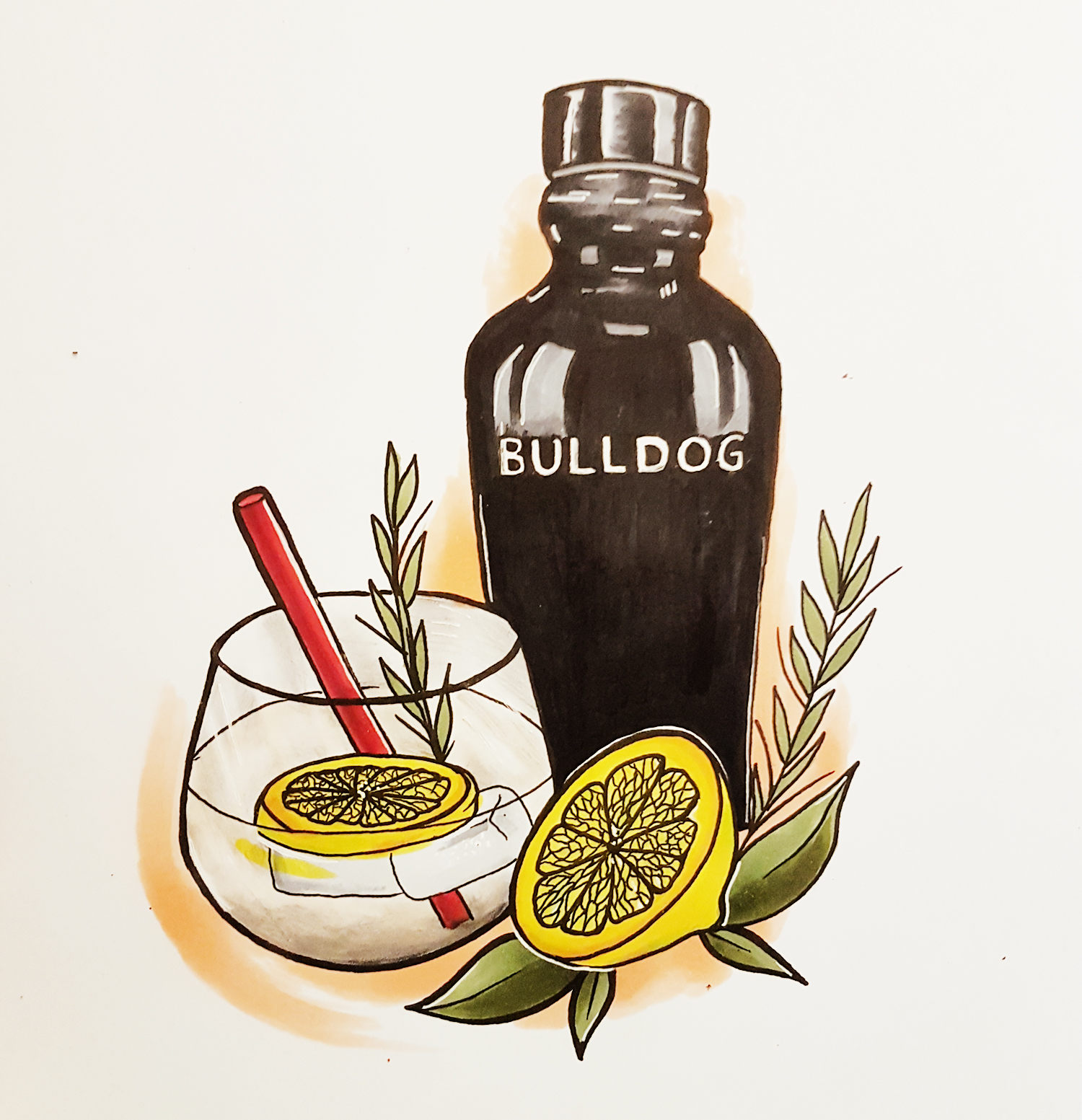 bulldog drink, illustration