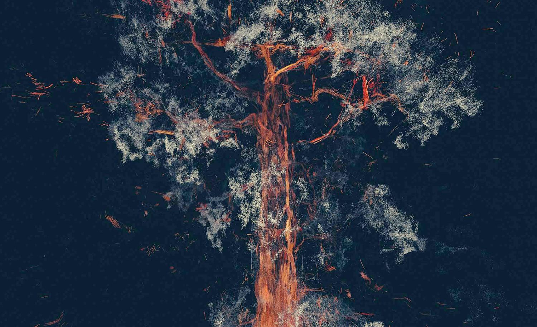 tree and lights, Treehugger Wawona