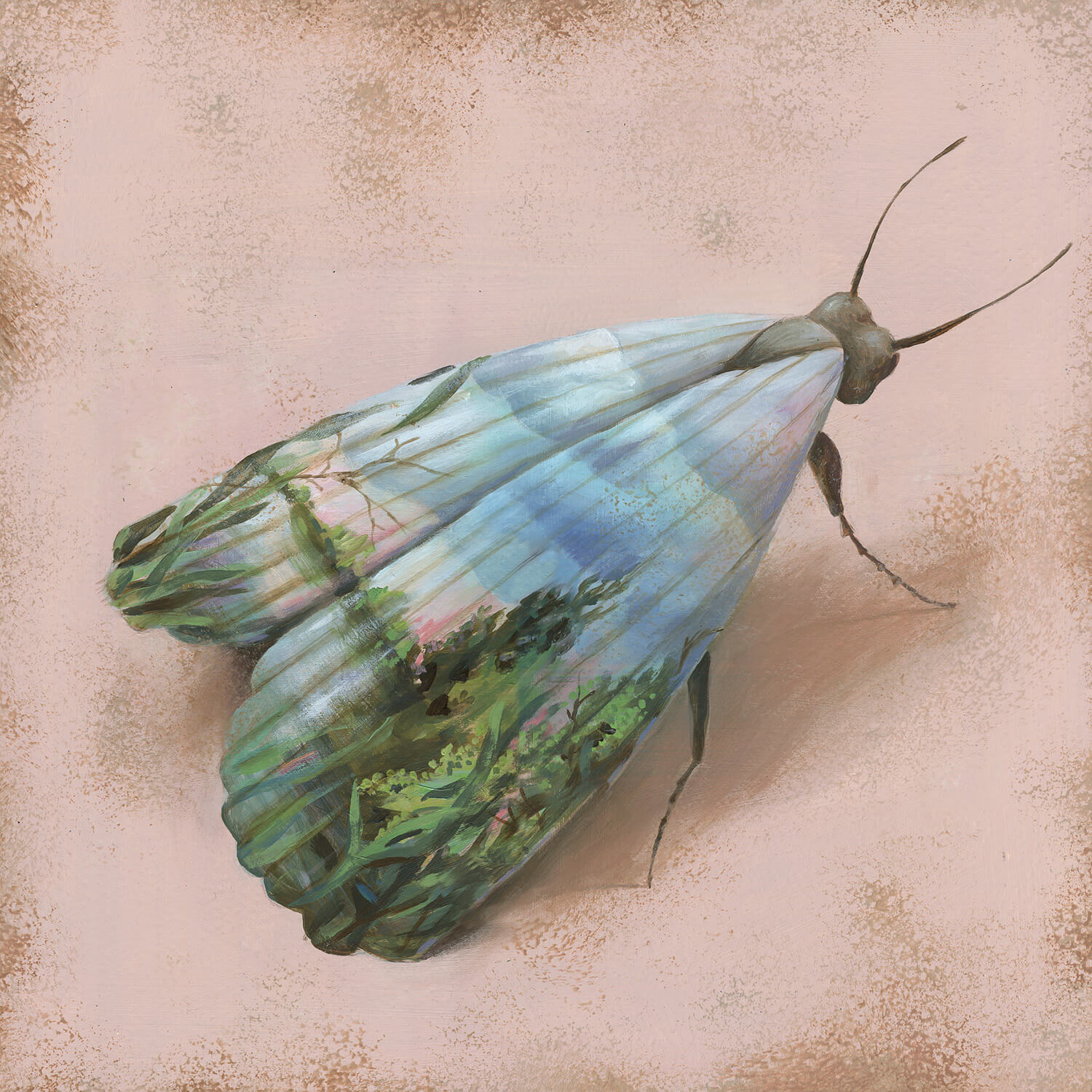 moth with landscape painted on wings