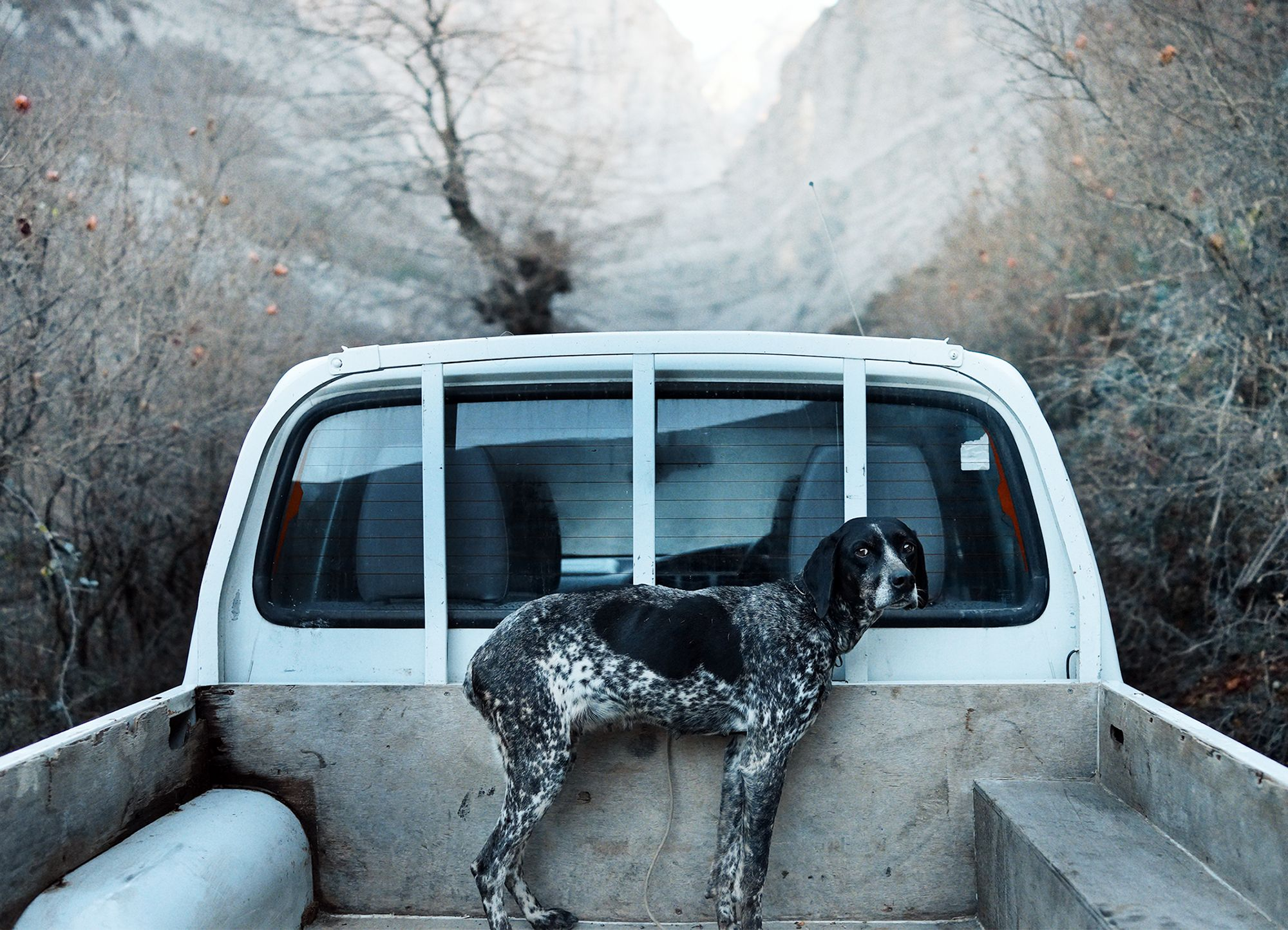 dog in back of truck, untitled movie