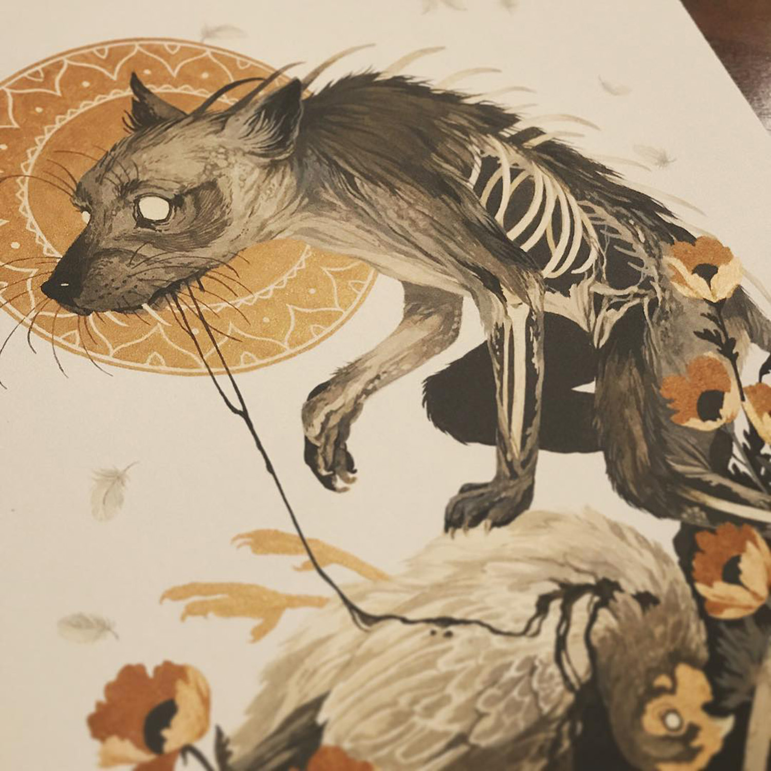 Detail of wolf looking over dead chicken