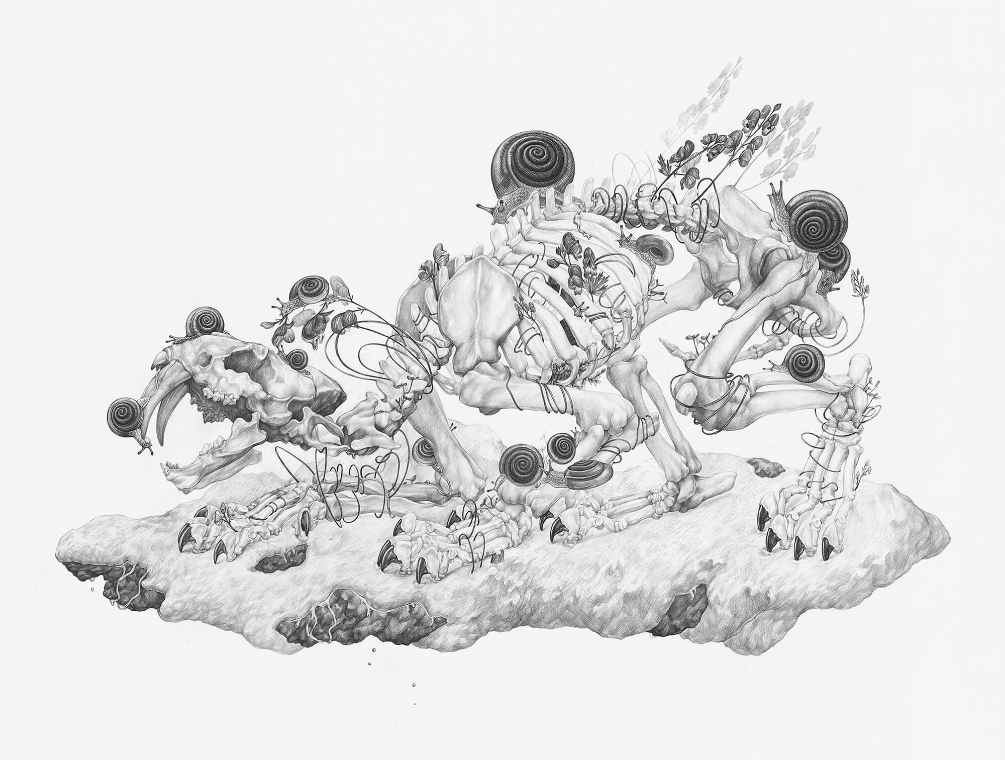 Skeleton and animal drawing