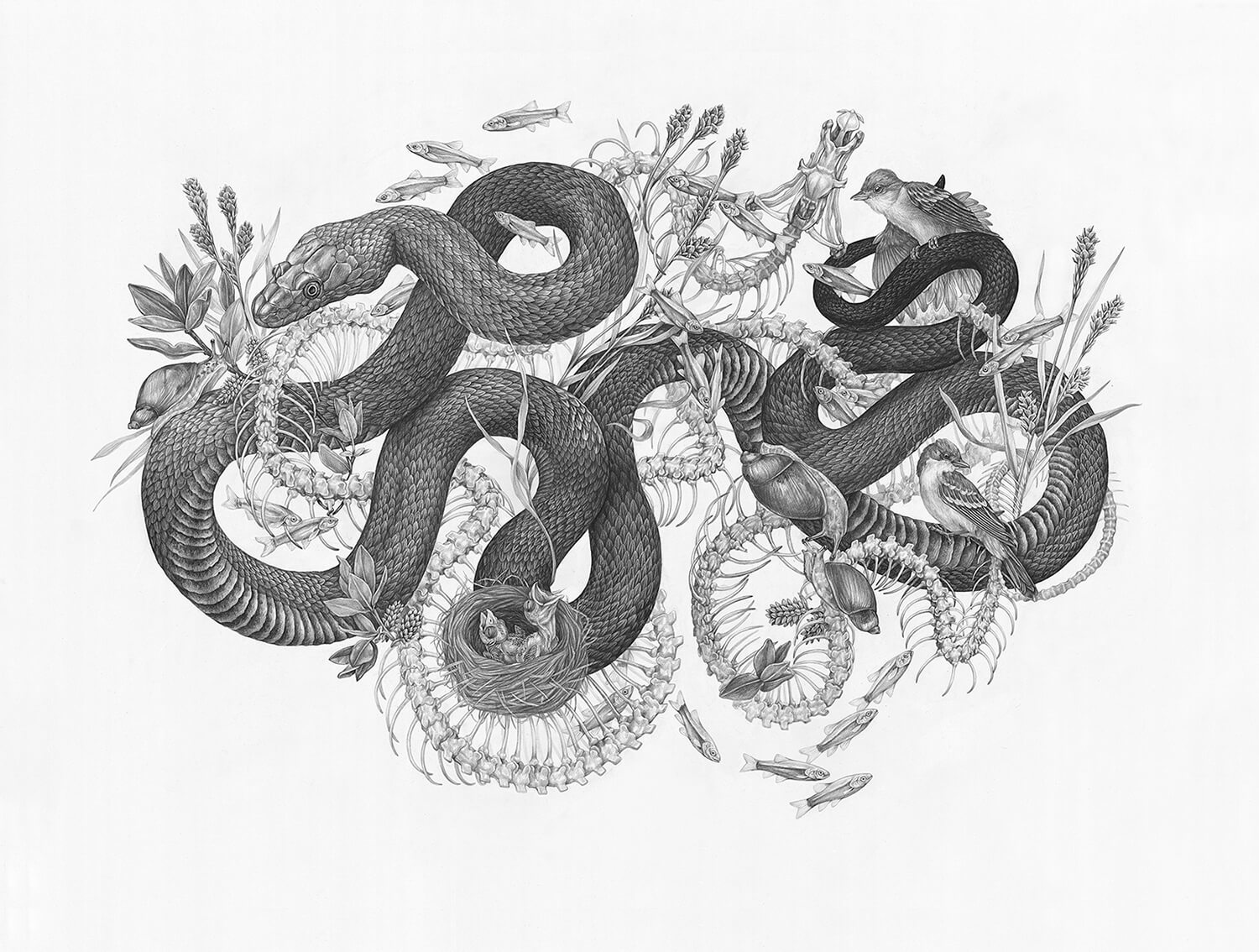 Drawing of snakes